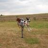 chieeta-vycvik-vycvik_chieetka-dogdancing
